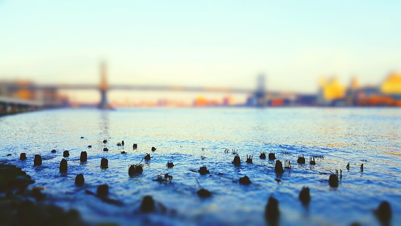 Showcase March New York City Tilt-shift East River, NYC Water Remains Of Pier Architectural Detail Riverwalk Landscape_Collection Interesting Perspectives Under The Bridge Manmadestructures No People Adapted To The City The Secret Spaces