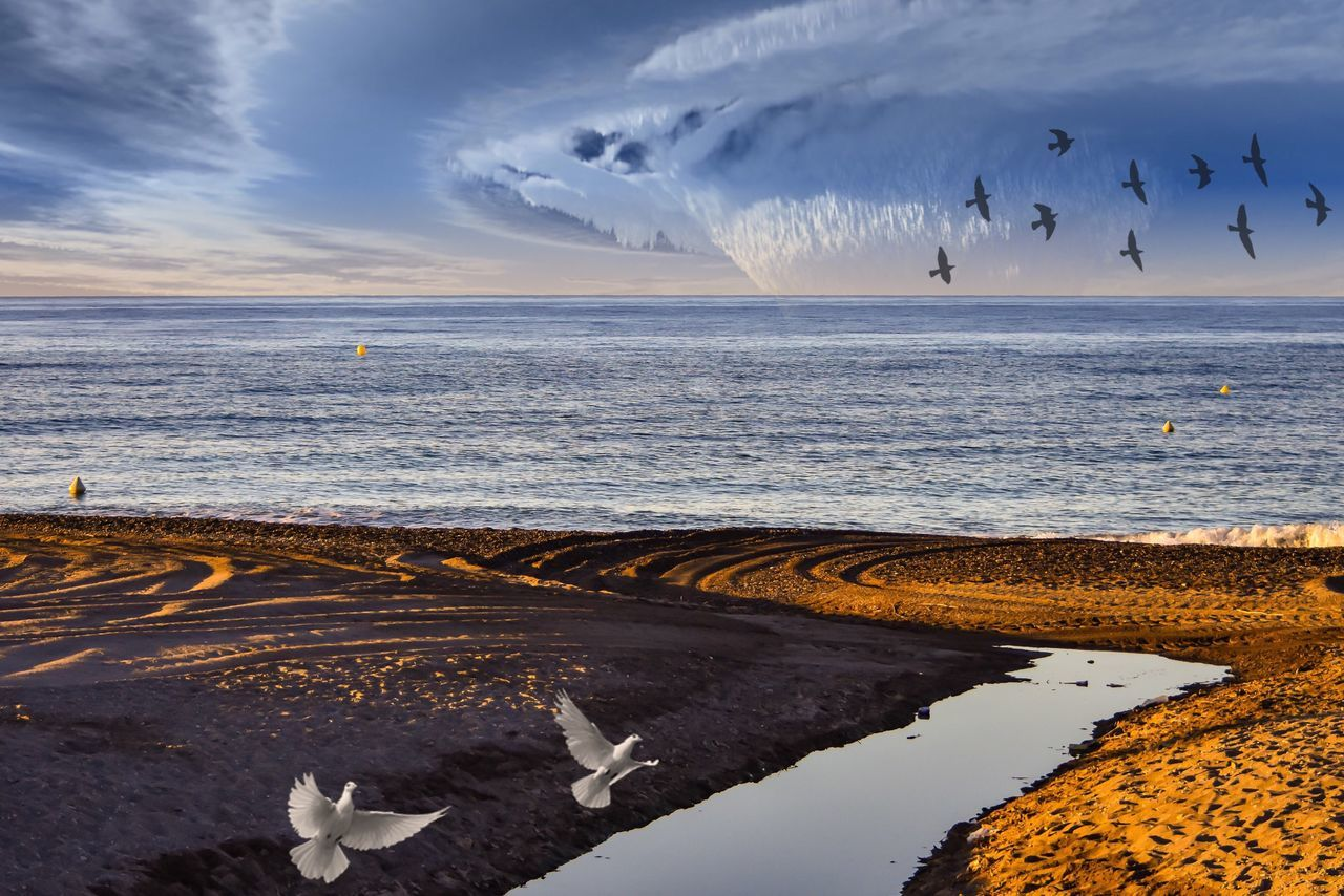 Idilic Scene Tranquility Horizon Over Water Exceptional Photographs EyeEm Best Shots Let's Do It Chic! Respect For The Good Taste Sea Beach Sky Water Nature Scenics Sand Beauty In Nature Tranquil Scene Shore Outdoors Cloud - Sky Tranquility Day No People Animal Themes Birds Migrating
