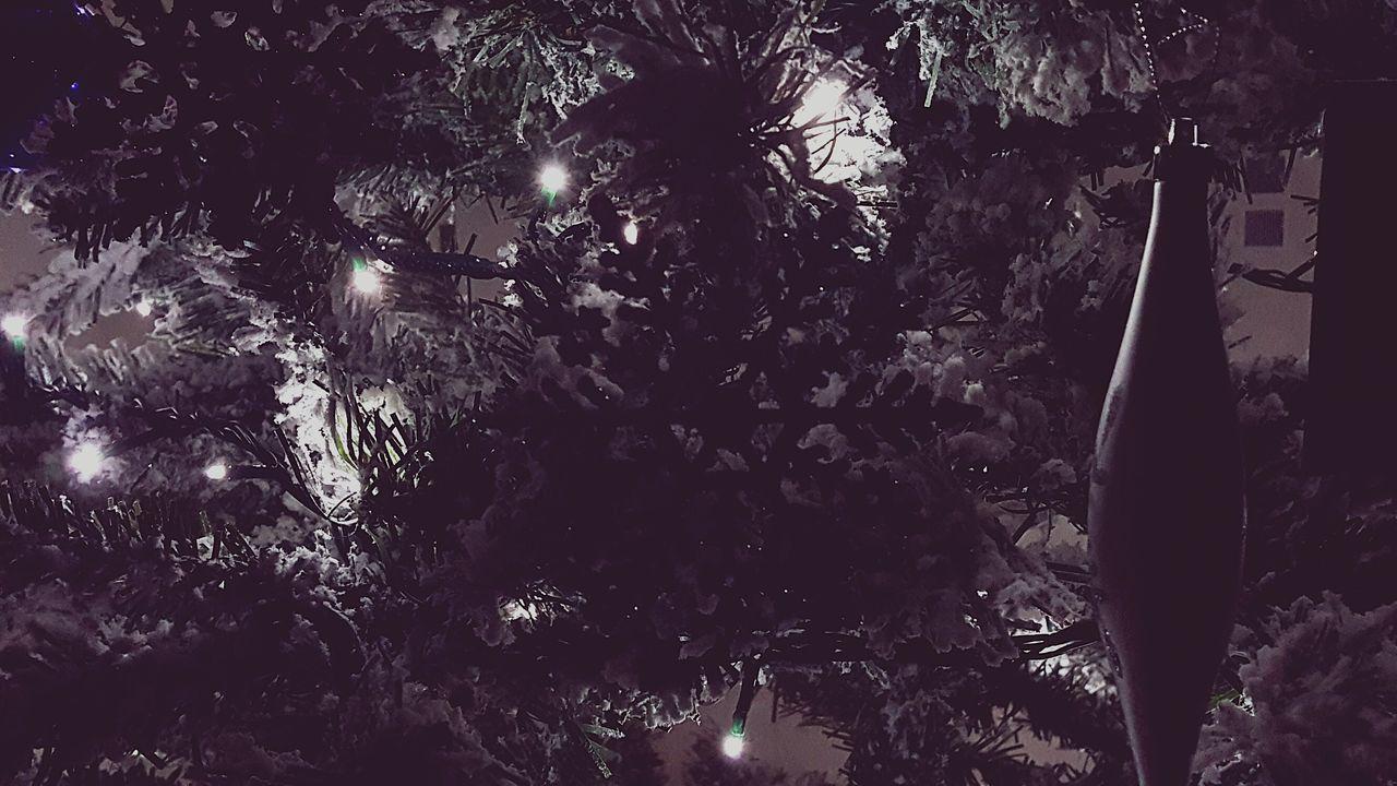 Tree Branch Nature No People Illuminated Night Christmas Christmas Tree Outdoors