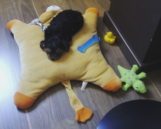 Mi Perro De Bebe