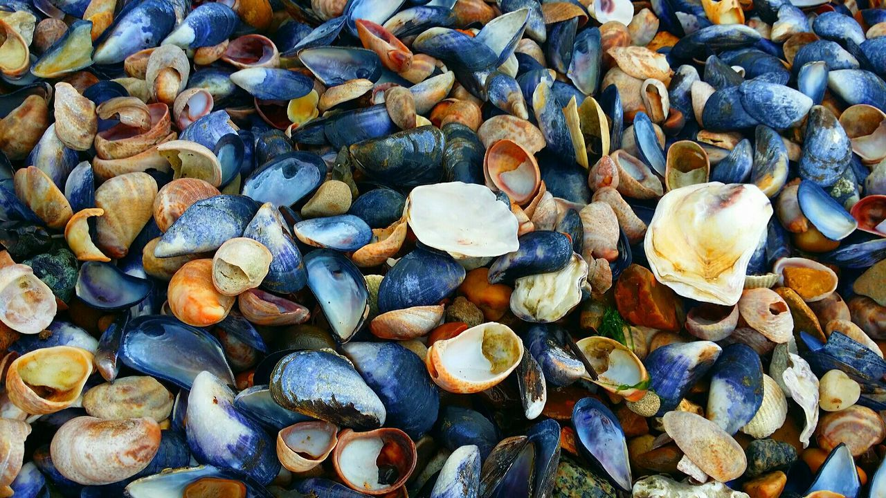 Harwichseafront Sea Shells Shell Colourful Beach Beachphotography