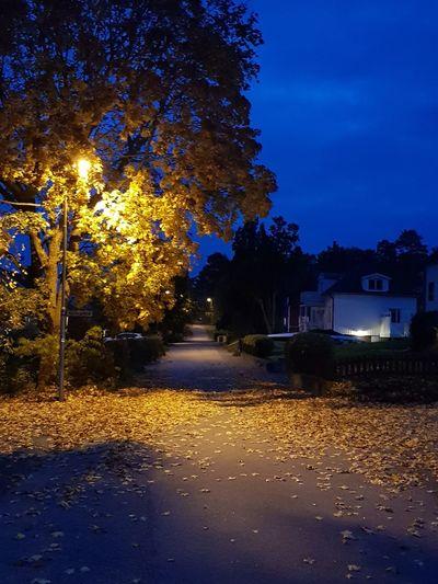 Autumn Tree Night Outdoors