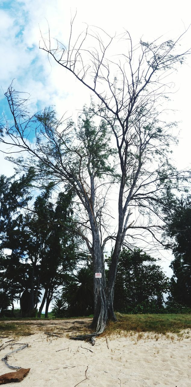 tree, nature, landscape, sky, branch, growth, no people, beauty in nature, day, outdoors