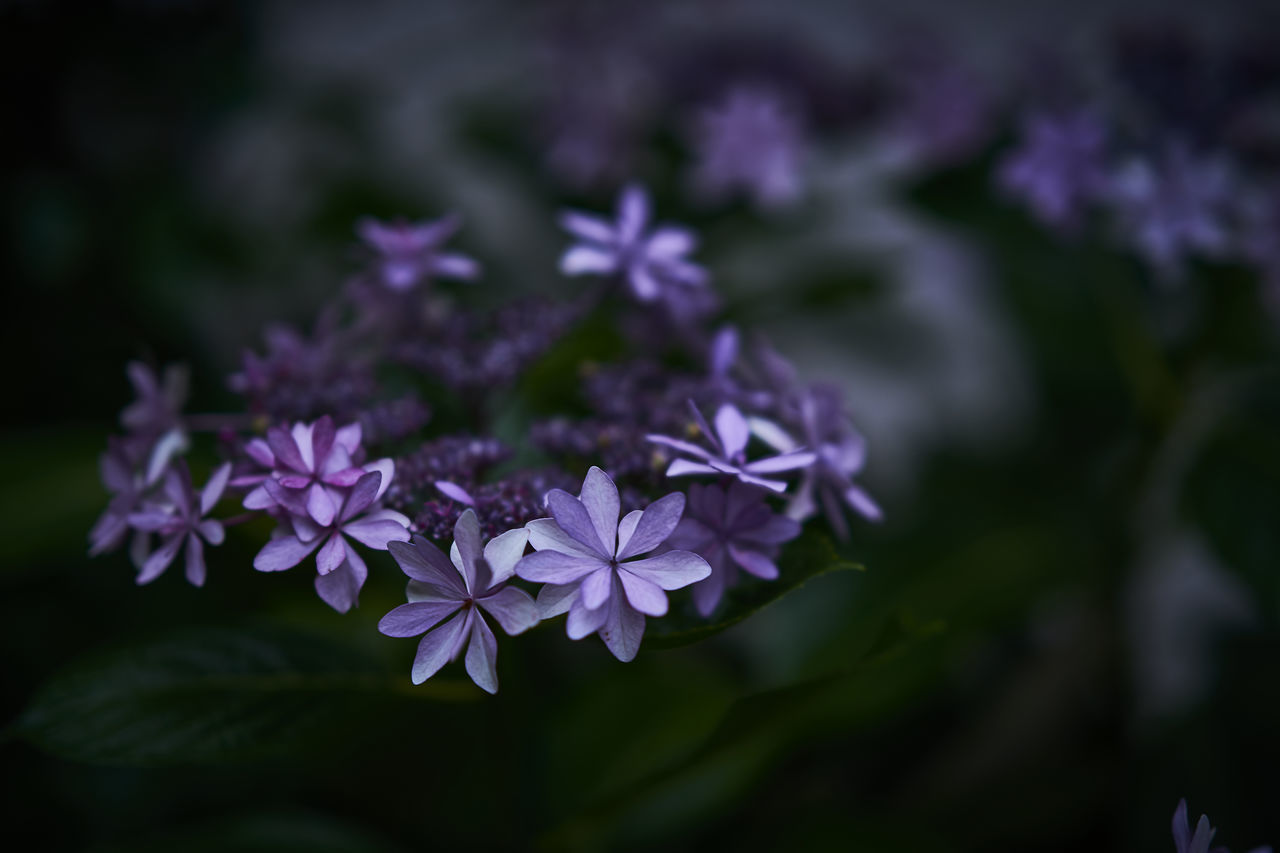 Beauty In Nature Blooming Close-up Eye4photography  EyeEm Best Shots EyeEm Gallery EyeEm Nature Lover Flower Flower Collection Flower Head Flowers Flowers,Plants & Garden Focus On Foreground Fragility Freshness Growth Light And Shadow Nature Outdoors Petal Plant Purple