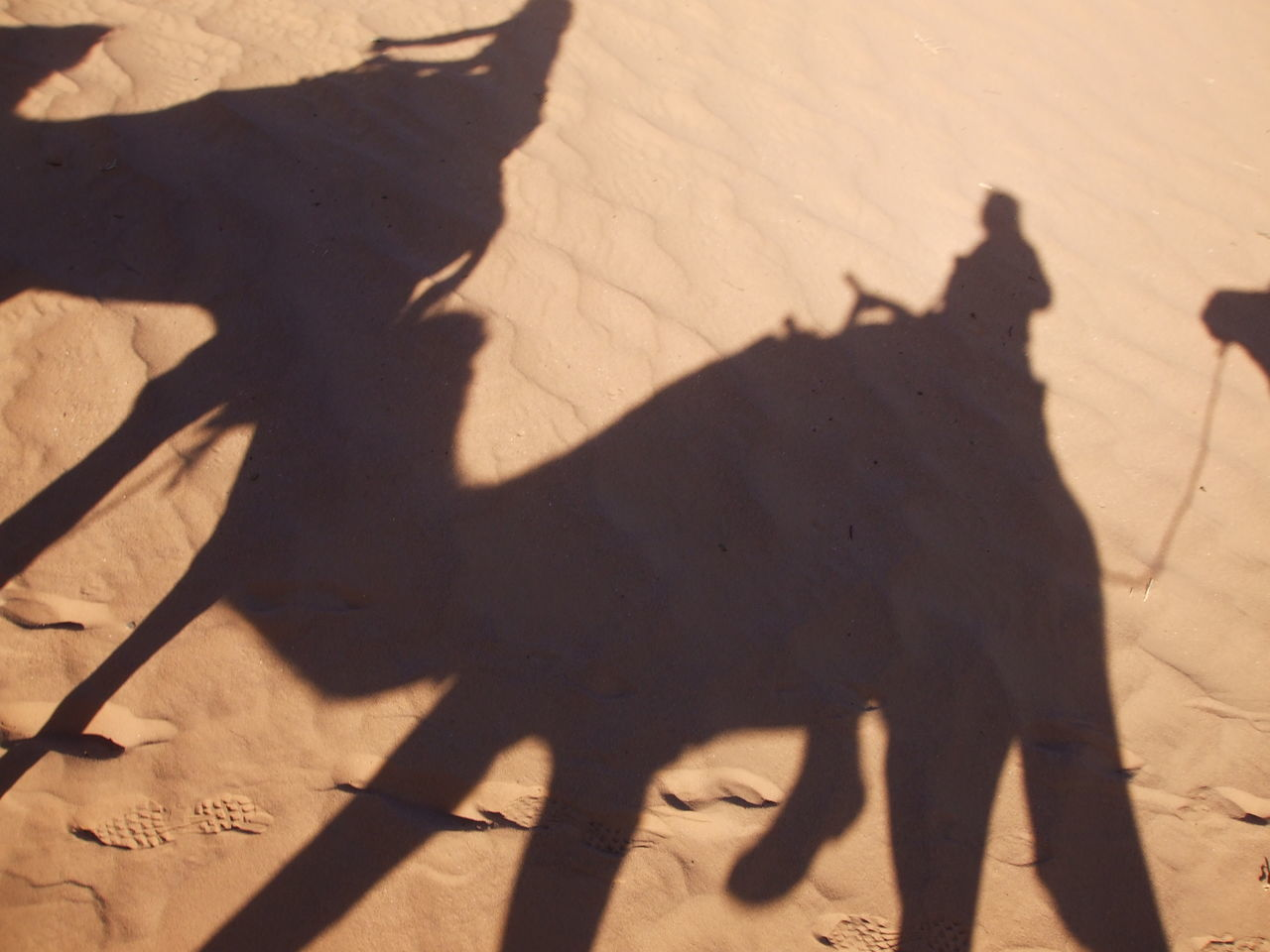 On our way Camel Domestic Animals Focus On Shadow Mammal One Person Sand Shadow Sunlight Working Animal