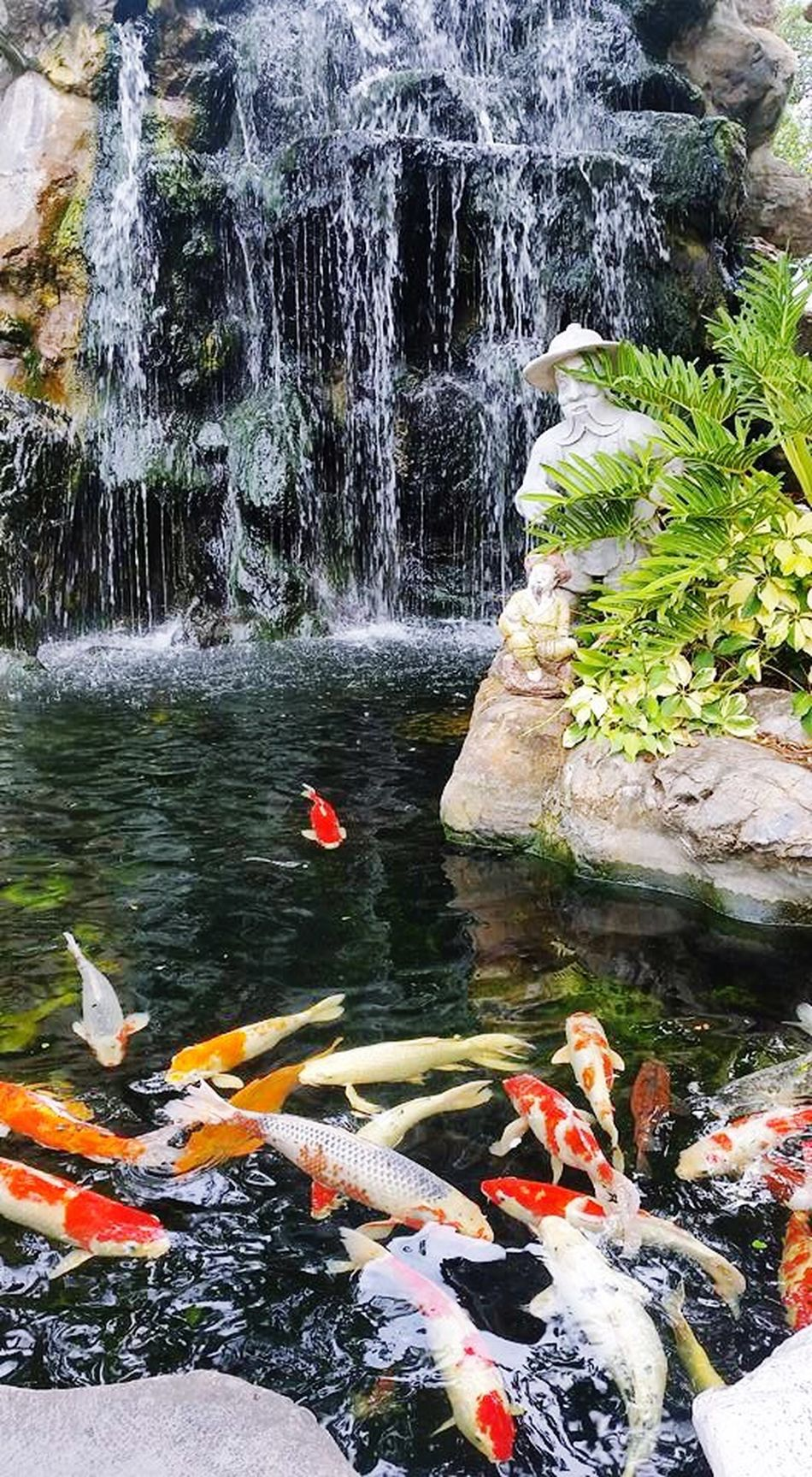 EyeEmNewHere Fish Pond วัดโพธิ์