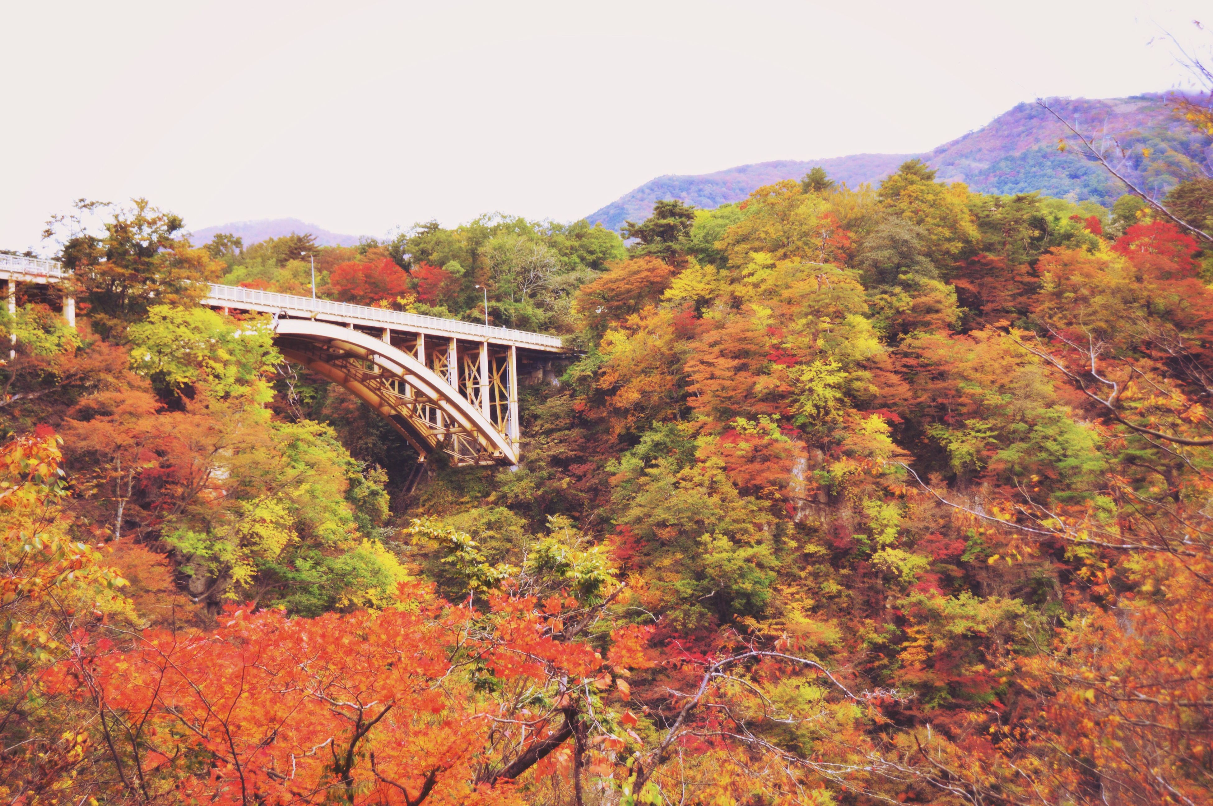 tree, growth, bridge - man made structure, clear sky, nature, change, autumn, plant, outdoors, architecture, built structure, day, beauty in nature, leaf, no people, scenics, railway bridge