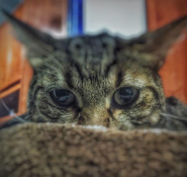 Looks that kill.. Love Cat