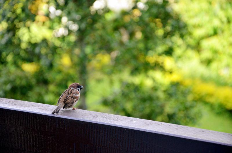 Animal Photography Animal_collection Bird Photography Birds Of EyeEm  Birds_collection Birds🐦⛅ Birdwatching EyeEm Animal Lover EyeEm Nature Lover