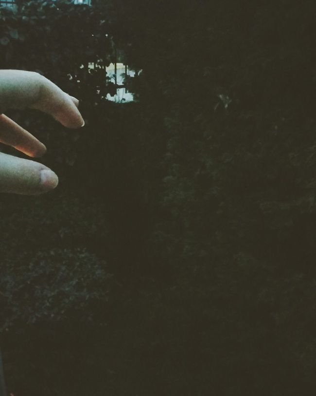 Woods A Walk In The Woods Into The Woods Intothewild Forest Myhome Mygarden Darkandlovely Takemyhand Beautiful Nature