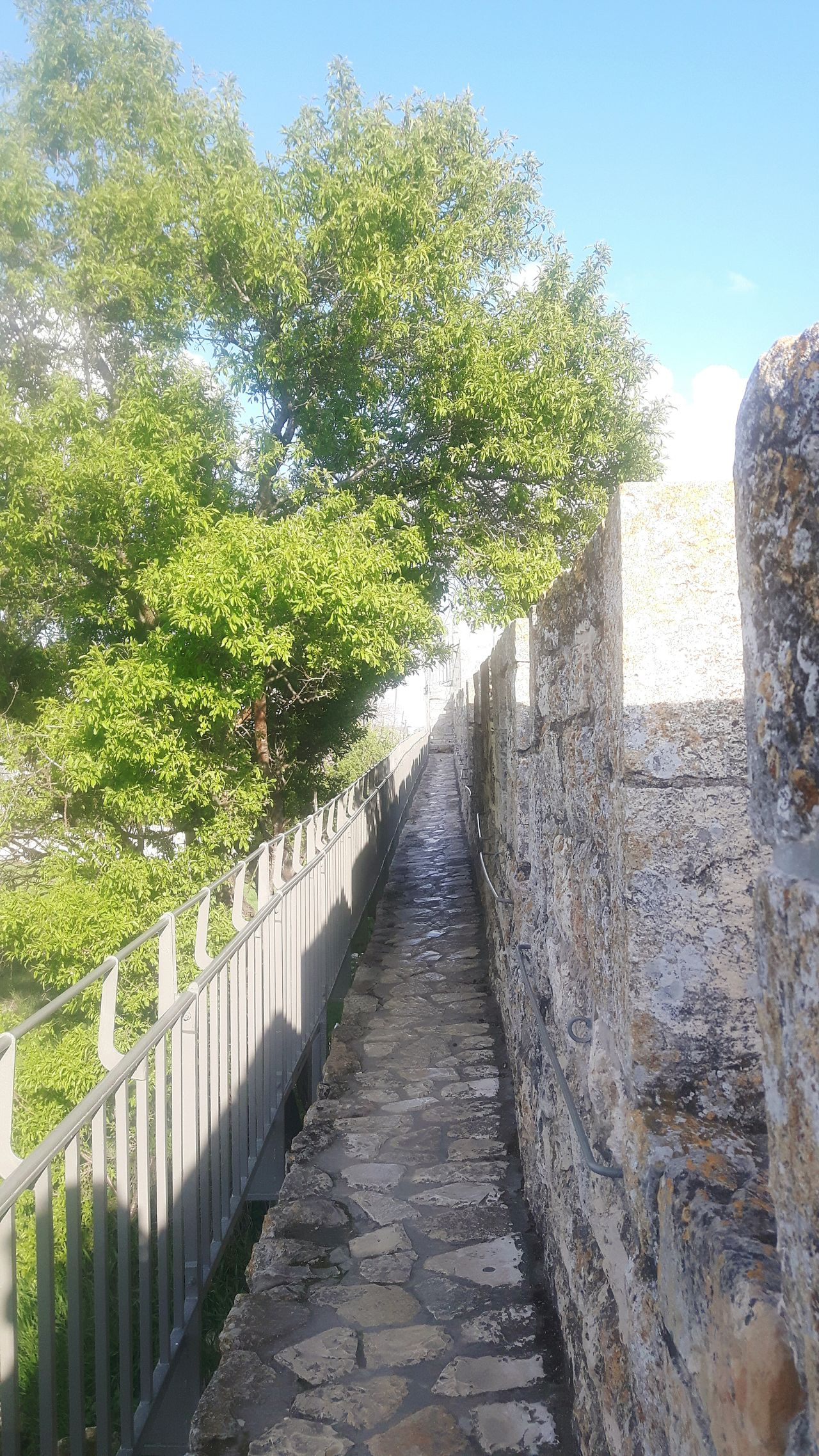 Ancient Civilization Ancient Rocks Jerusalem Rampartswalk Jerusalem City Wall Ramparts Jerusalem Israel Jaffa Gate King David Tower Rampart Tourism Ramparts Walk Jerusalem Stadtmauer Above Jerusalem Stadtmauer Sightseeing Dicover Your City Tree Green Tree