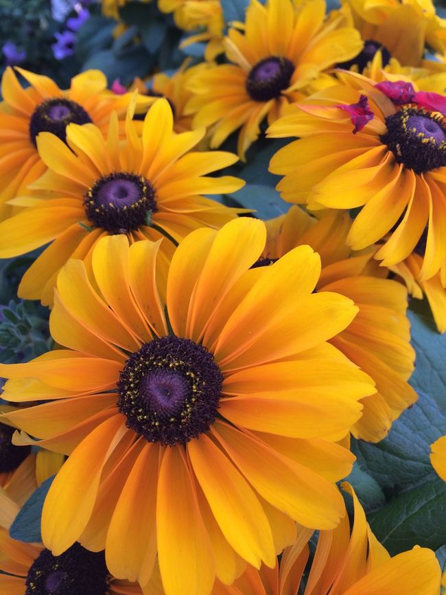 Yellow Flower Flowers Flower Nature On Your Doorstep