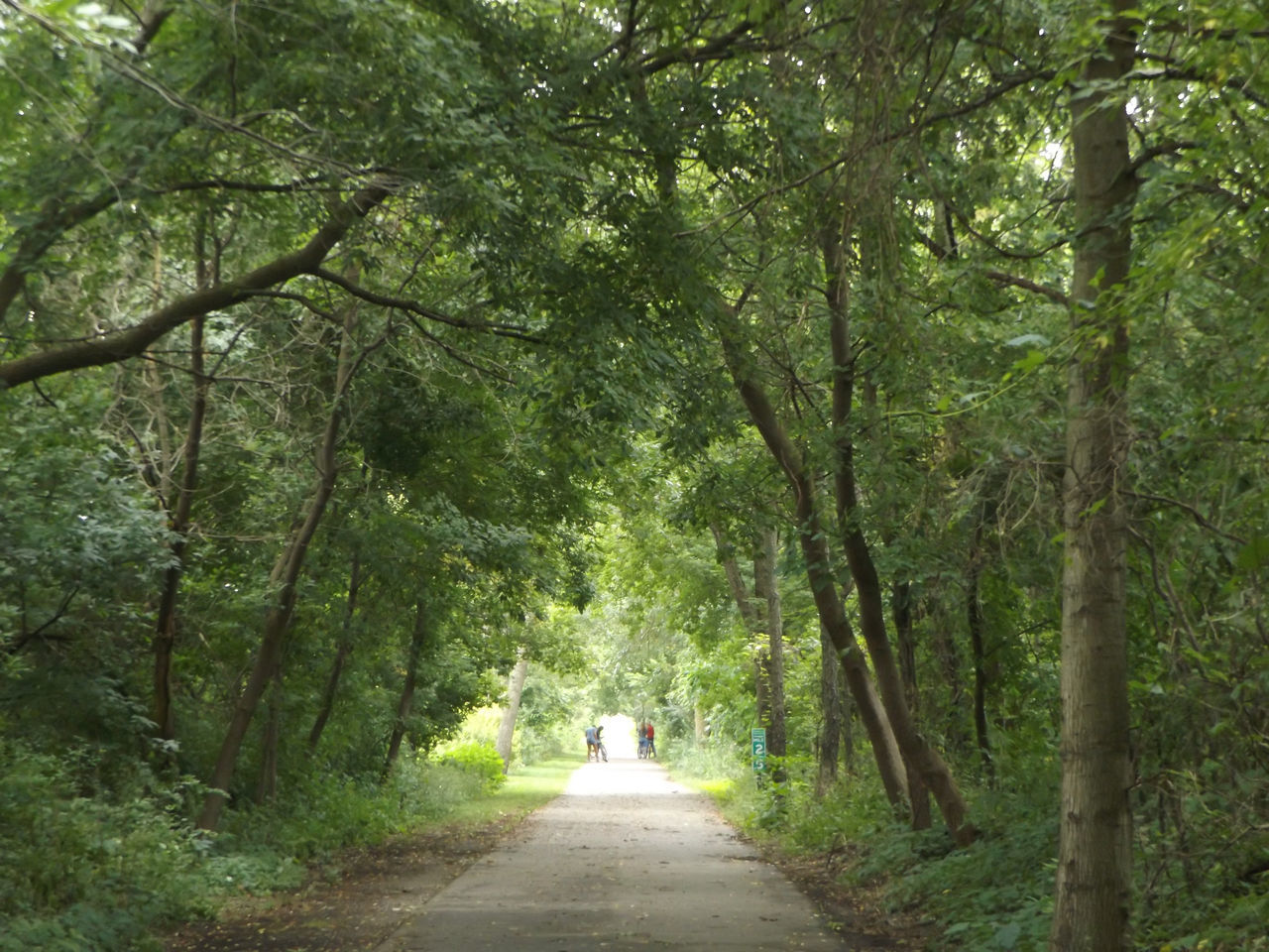 Bike Ride Bike Trail Tree Canopy  Nature On Your Doorstep Naturelovers Nature_collection Nature Photography