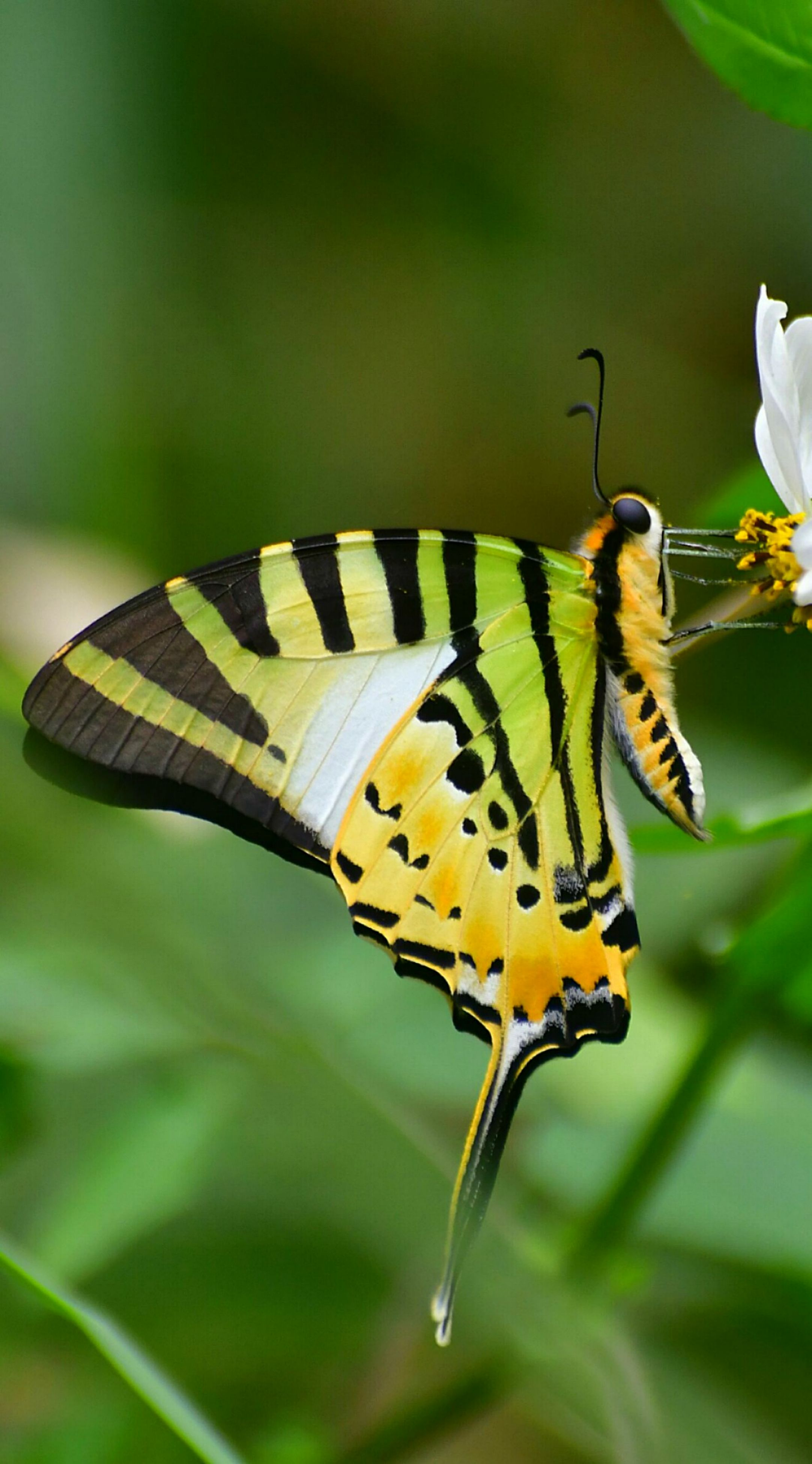 insect, animal themes, animals in the wild, one animal, butterfly - insect, nature, close-up, animal wildlife, no people, plant, beauty in nature, outdoors, day, pollination