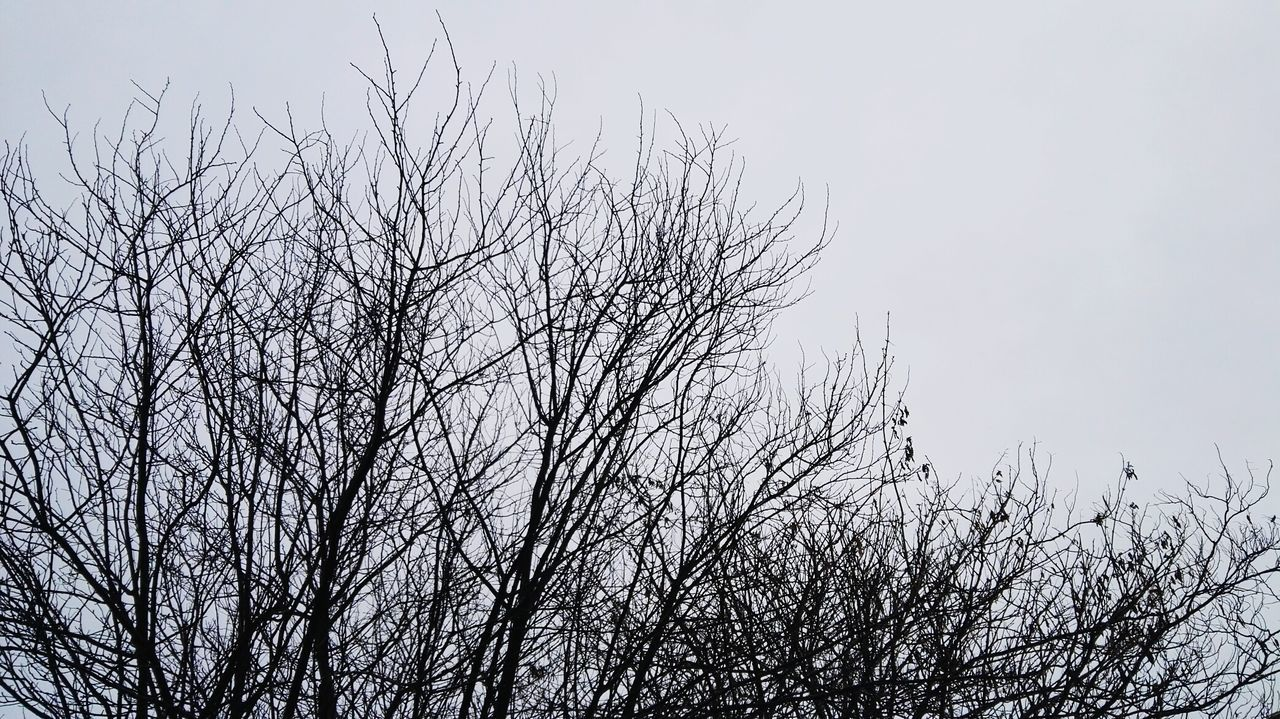 Winter Trees Winter Trees - Ip4s Wexposed Beta Flying Large Group Of Animals Bird Flock Of Birds Sky Animal Themes Cloud - Sky Nature Outdoors No People Day Migrating Close-up Animals In The Wild Beauty In Nature Airshow First Eyeem Photo Huawei HuaweiP8
