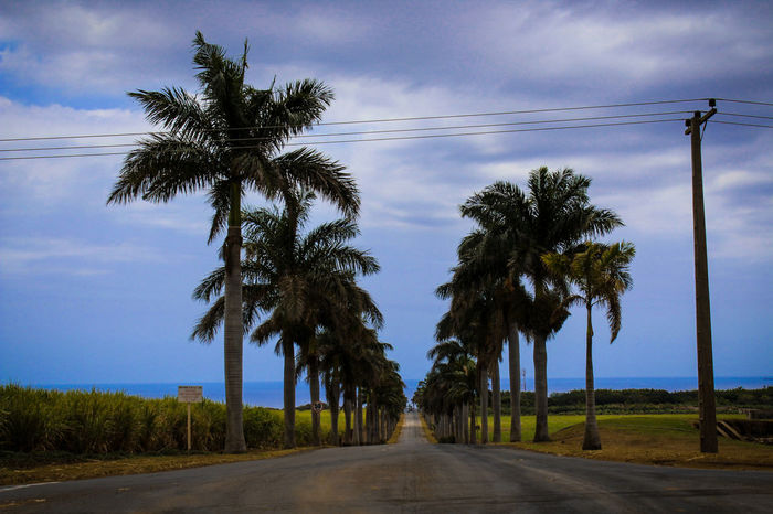 Palm Road. ヤシの木の愛 🌴 Canon Color Art Colors Amazing Palm Tree Palm Trees Travel Tourism Tourist Destination Tree Cloud - Sky Sky Road Landscape Outdoors No People Blue Day Nature Beauty In Nature Rural Scene