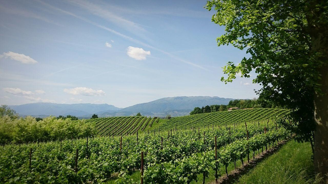 Landscape Veneto Italy Wineyard Proseccohills Green