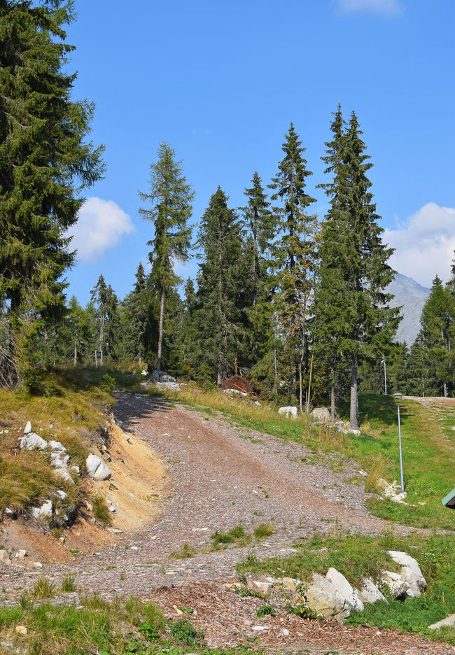 Mountain road in woodland near Strbske Pleso (Štrbské Pleso) in Vysoke Tatry (High Tatras) mountains, Slovakia Beauty In Nature Countryside Day Empty Road Forest Highlands Hiking Mountain Nature Non-urban Scene Outdoors Park Remote Route Sky Solitude Strbske Pleso Tatra Mountains Tatry The Way Forward Tranquil Scene Tree Vacation Walking WoodLand