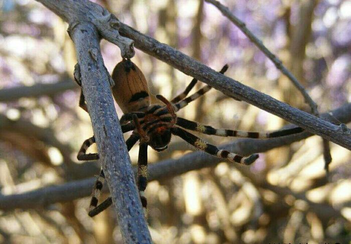Spider Stick Animal Neutral Colours Nature Photography Too Close For Comfort