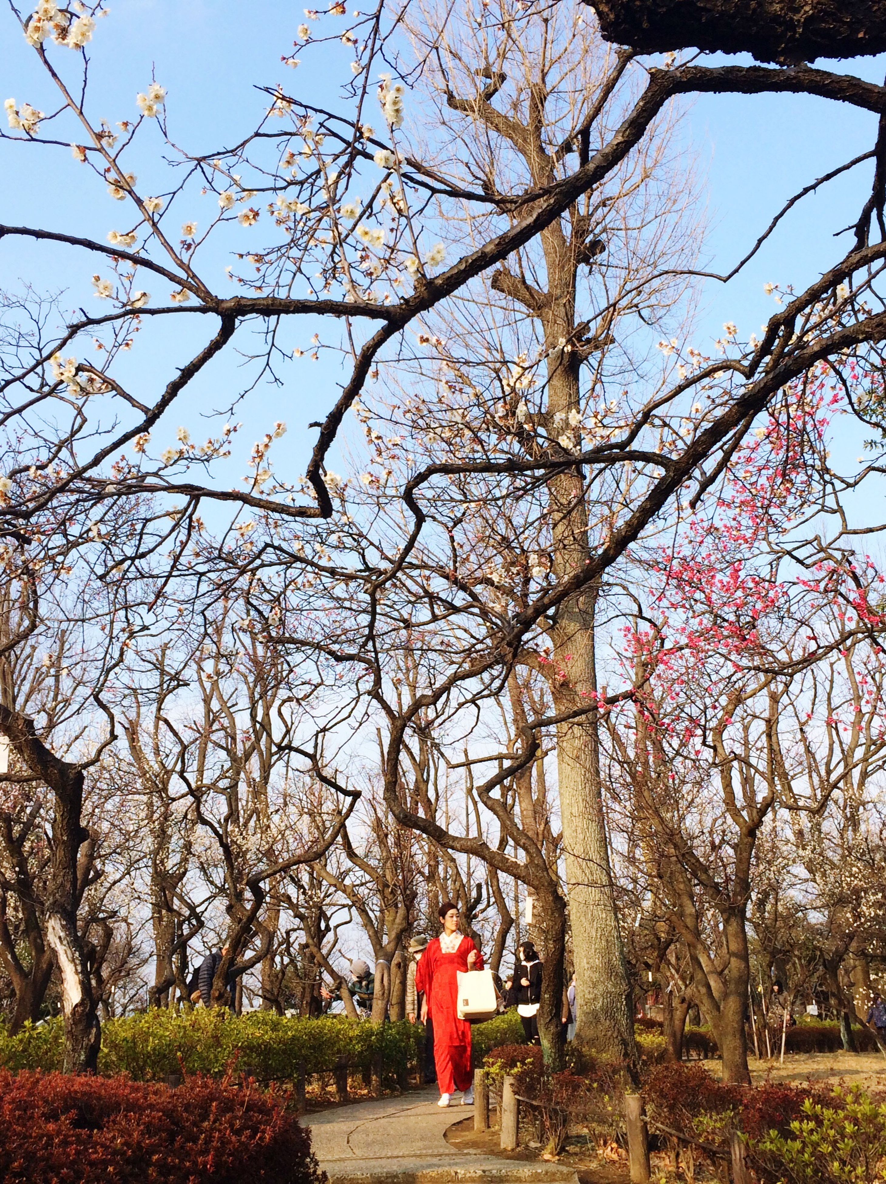 tree, lifestyles, rear view, leisure activity, full length, person, casual clothing, branch, standing, walking, girls, flower, bare tree, men, childhood, sky, holding, growth