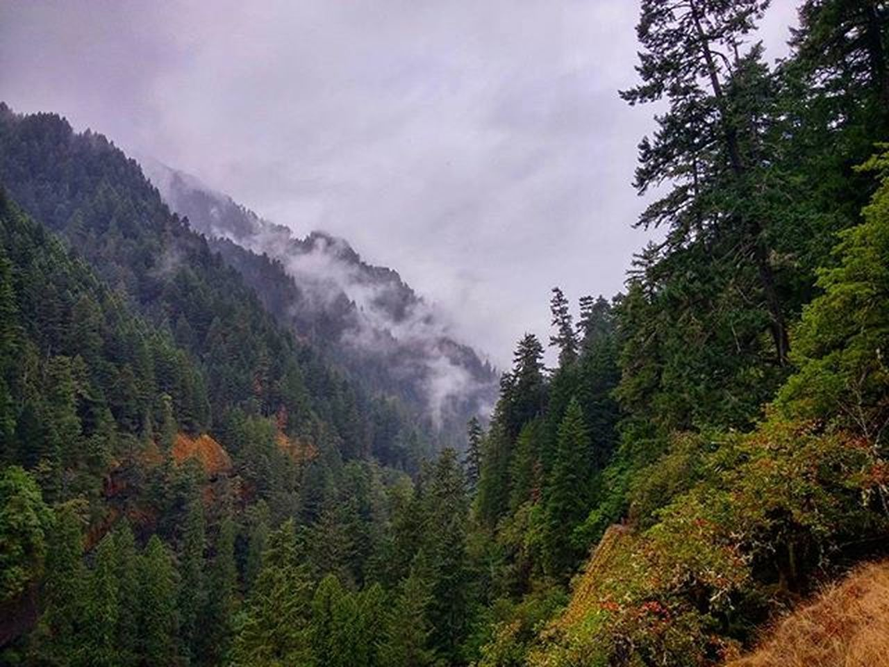 Lost in the Oregon mountains. Oregon Oregonnw Mountains Pacificnorthwest PNW Pnwcollective Northwest Explore Nature Forest Forest_masters Trees Pine Pineforest Clouds Misty Raining