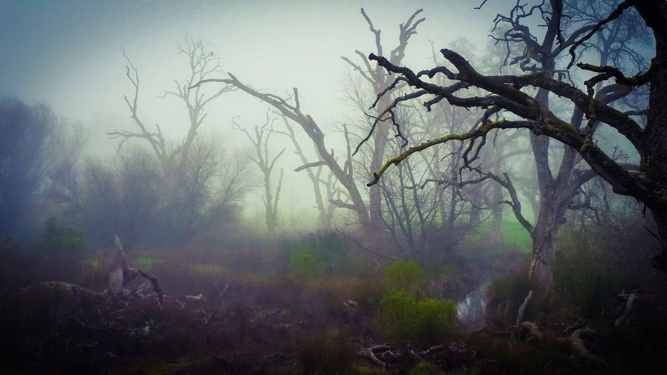 Beautiful stock photos of princess, Bare Tree, Beauty In Nature, Day, Fog