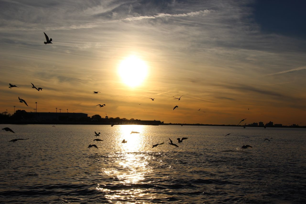 sunset, flying, bird, animals in the wild, animal themes, flock of birds, nature, large group of animals, beauty in nature, sky, silhouette, mid-air, scenics, water, animal wildlife, sun, cloud - sky, no people, sea, migrating, tranquility, tranquil scene, outdoors, spread wings, horizon over water, day