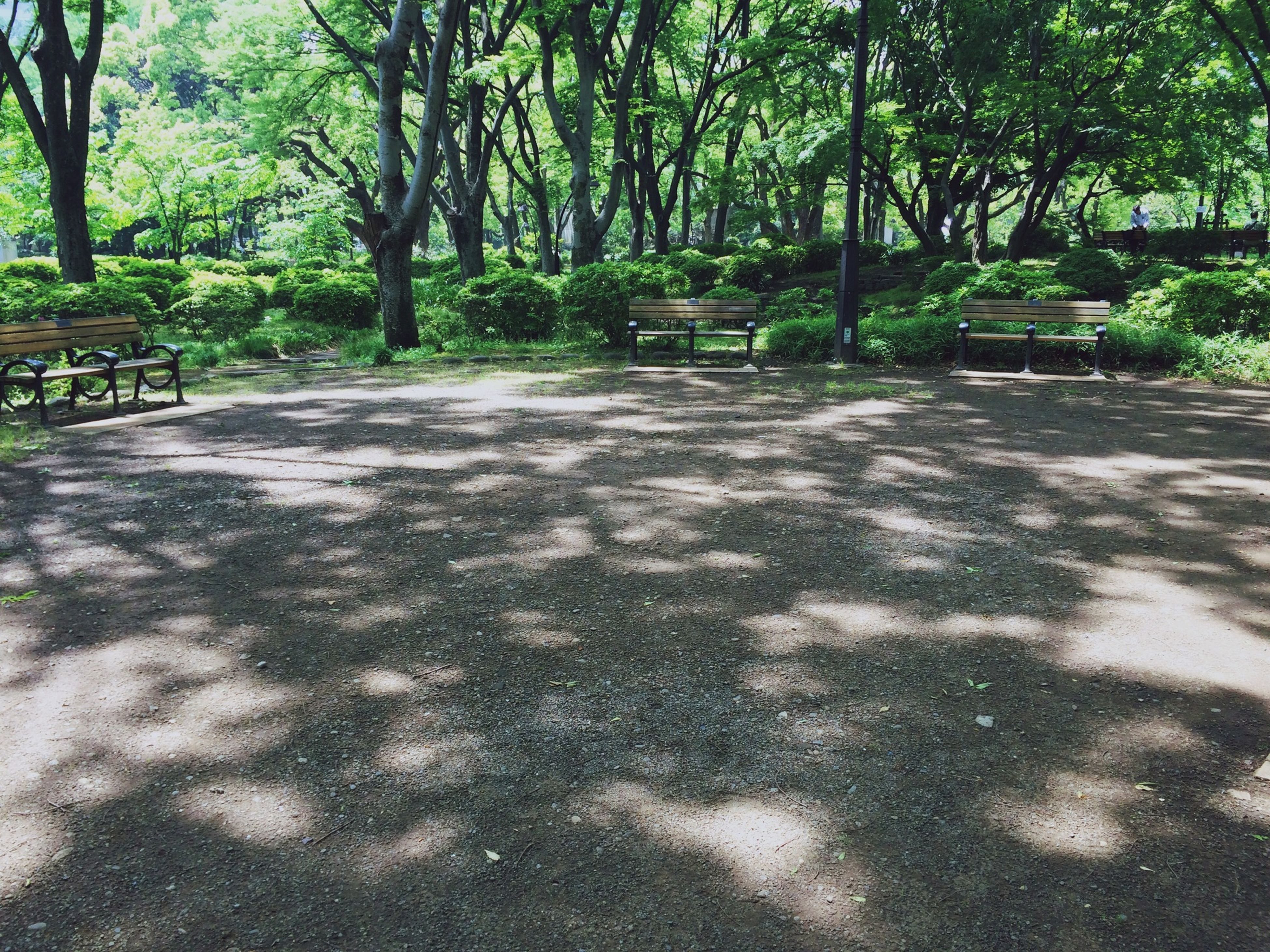 tree, tree trunk, growth, shadow, park - man made space, tranquility, the way forward, footpath, sunlight, nature, forest, park, tranquil scene, day, outdoors, branch, road, green color, no people, beauty in nature