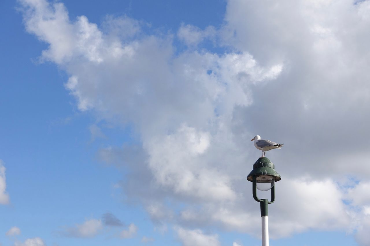 Bird Cloud - Sky Animals In The Wild Sky Low Angle View One Animal Day Animal Themes Outdoors No People Perching Seagull Seagulls Norderney Möwe