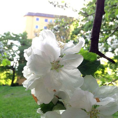 Flower High Rise Oslo