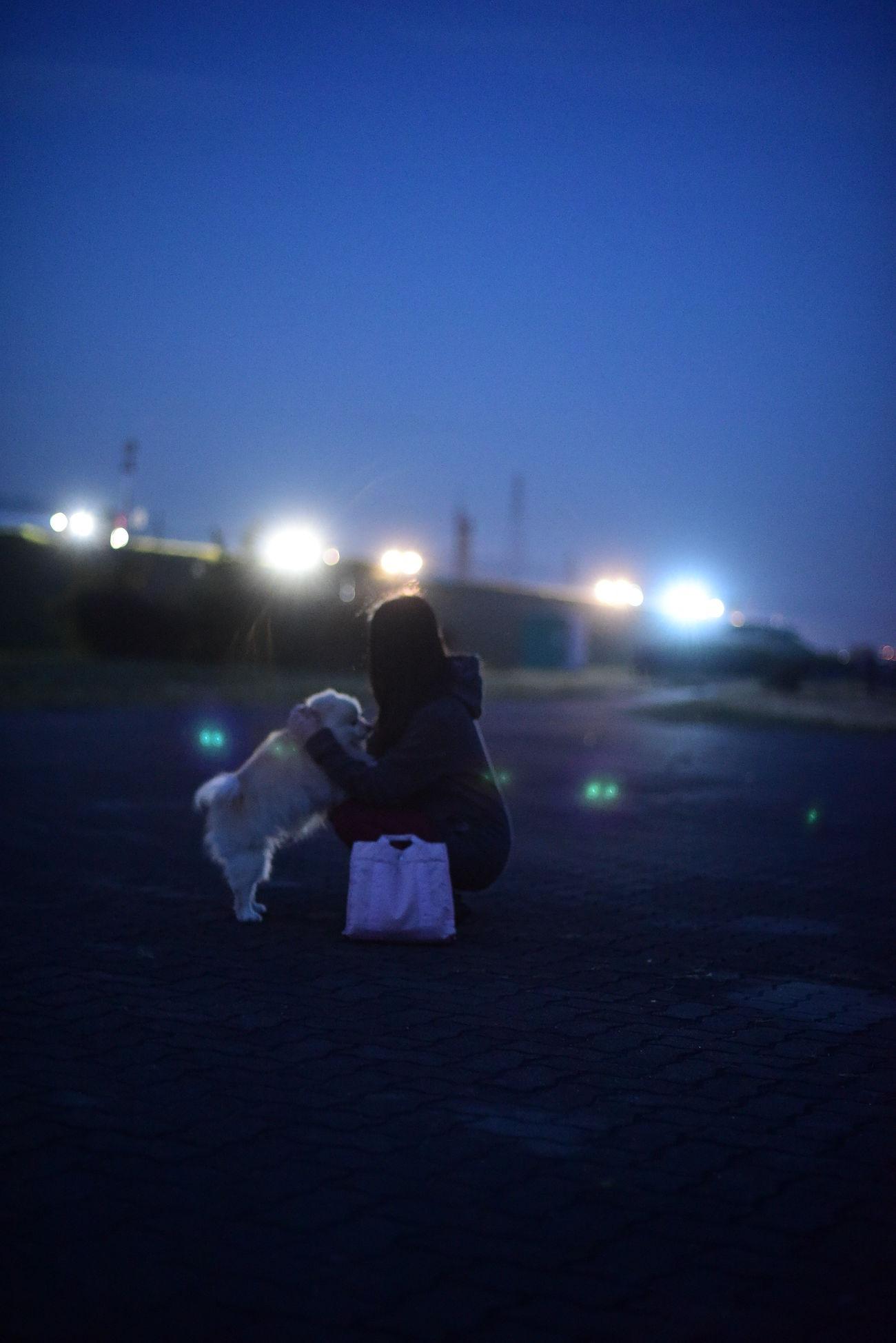 Night ポメラニアン Pomeranian EyeEm Dogs Mylovelydog 散歩 Blue