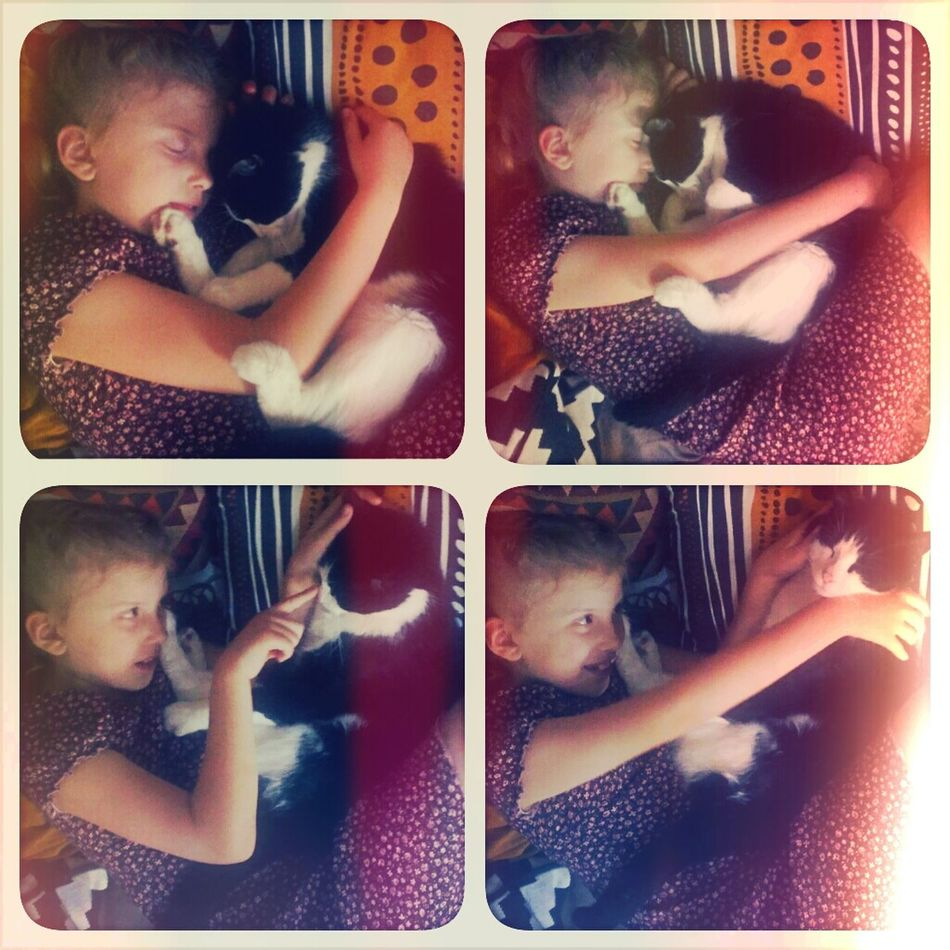 Mia & Tomte Cats Cute Children Me And Family