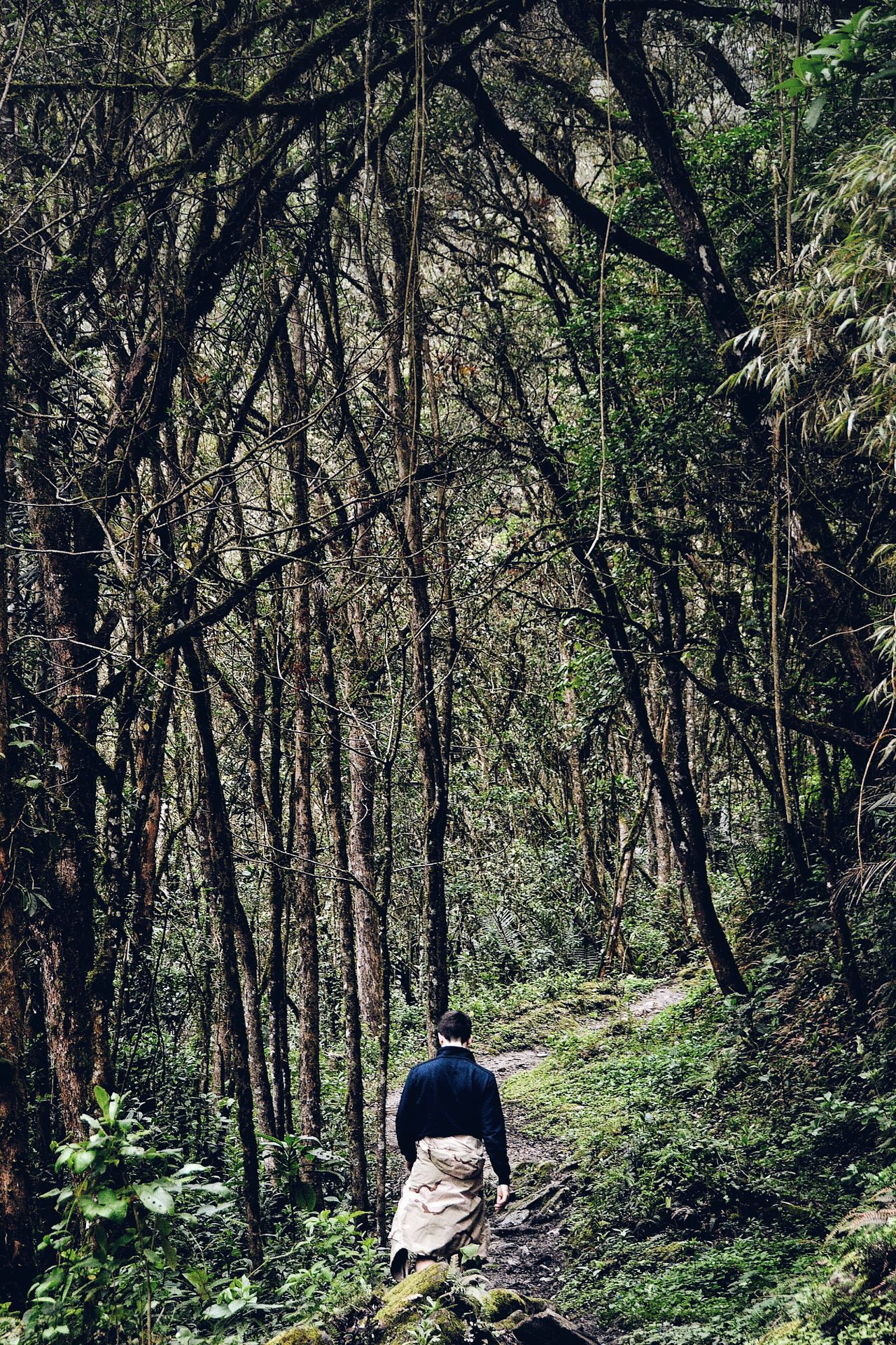 Into The Valley. Tree Forest One Person Nature Exploring Men Rear View Adventure Adult Beauty In Nature People Real People One Man Only Outdoors Scenics Tranquility Landscape Valley National Park Natural Reserve Valle Del Cocora Colombia Wildlife & Nature Jungle Tropical Forest