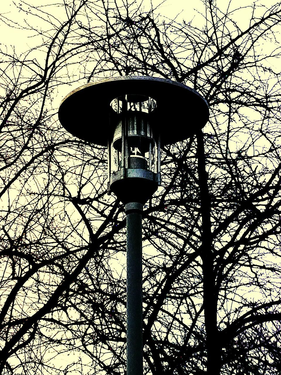 Low Angle View Of Lamp Post Against Bare Trees