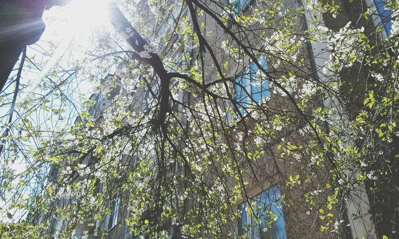 Spring Nice Spring Wonderful Polotsk