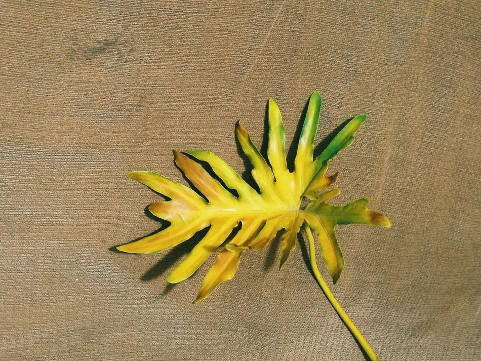 Wither Leaf Dry Dry Leaf Burlap Brown Big Leaf Yellow Leaf Drying Leaf Break The Mold Art Is Everywhere