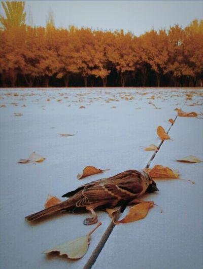 秋。 First Eyeem Photo