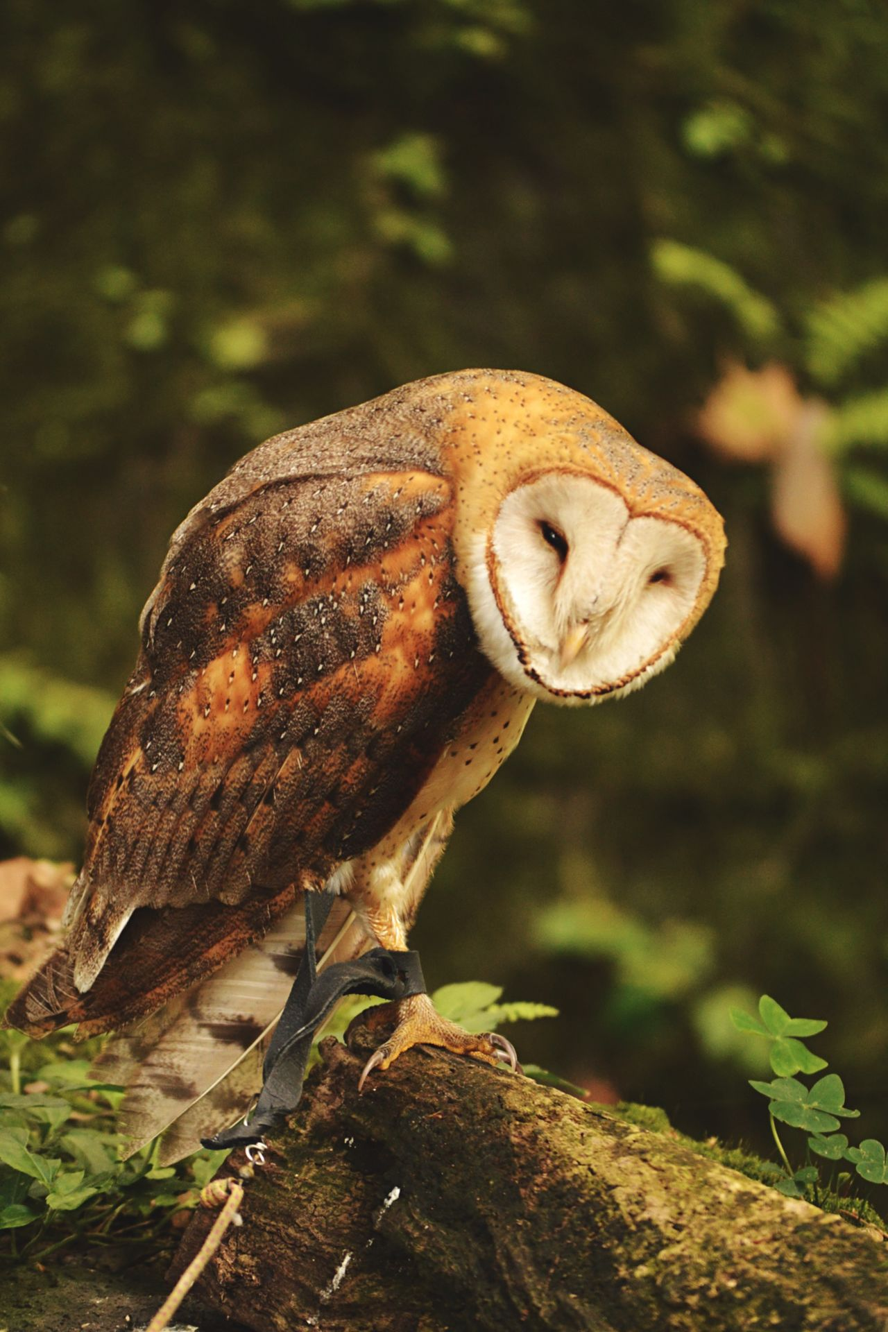 Beautiful stock photos of owl, Animal Themes, Animals In The Wild, Bird, Branch