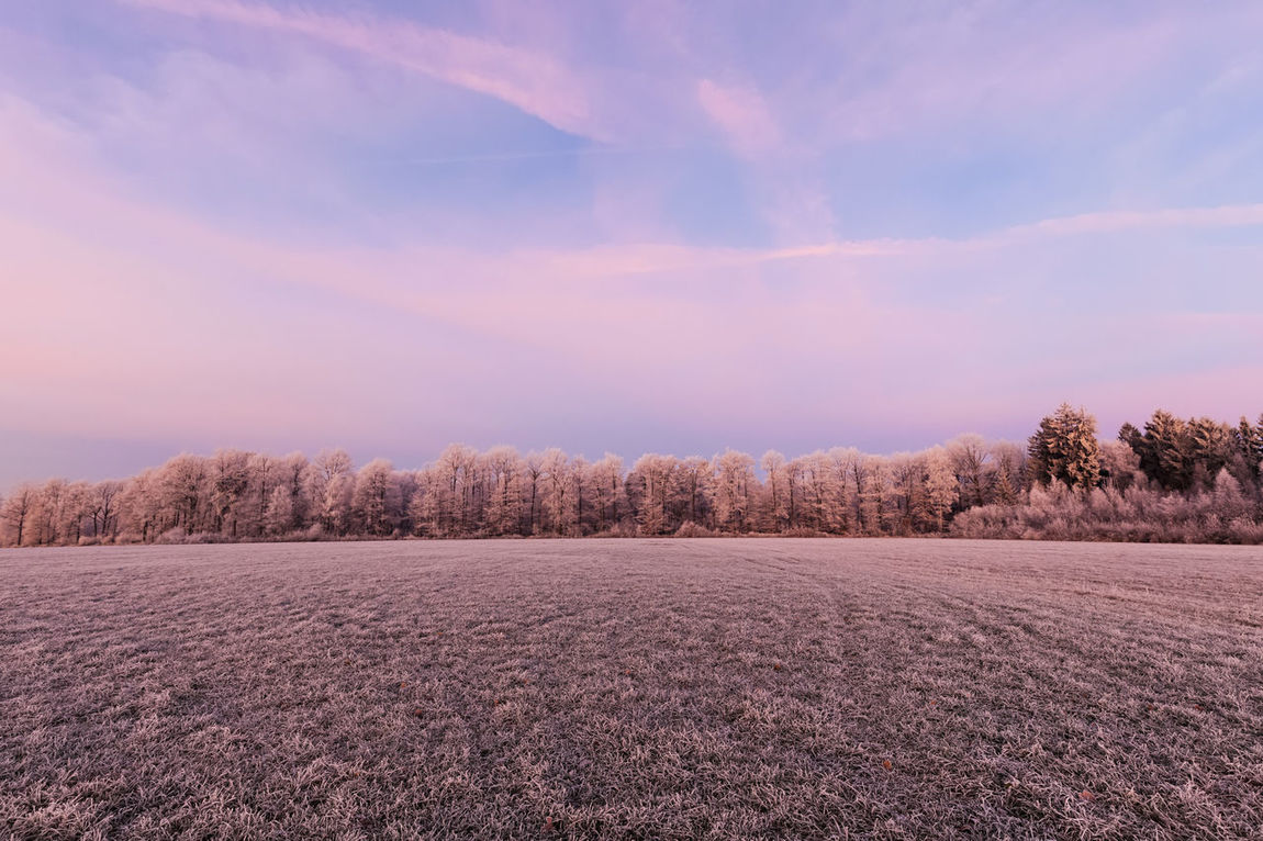 Frozen Nature In The Morning Agriculture Baden-Württemberg  Cold Day December Field Forest Frozen Landscape Morning Morning Light Nature No People Nobody Outdoors Sky Waldenburg Winter
