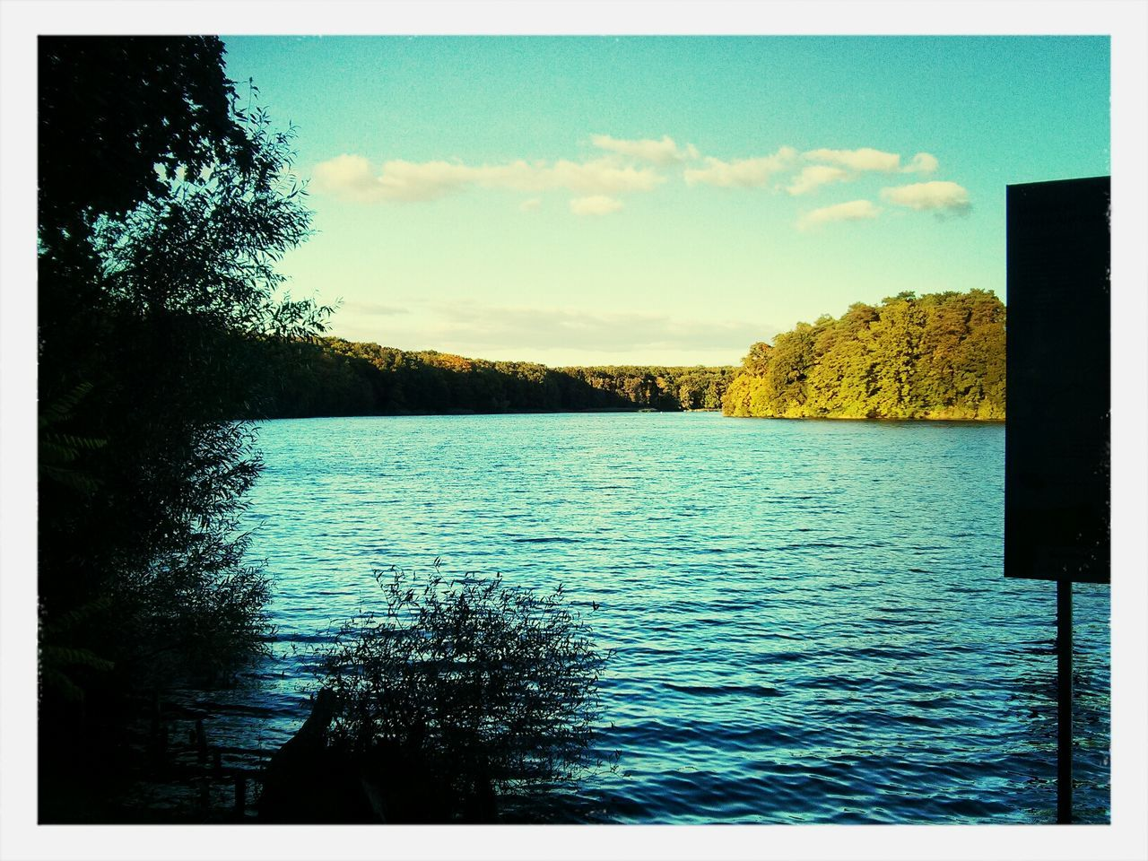 tree, tranquility, tranquil scene, nature, water, sky, scenics, beauty in nature, lake, outdoors, no people, rippled, day, scenery