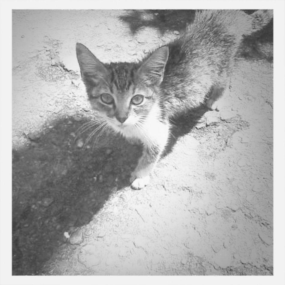 Mi gato Home Goods