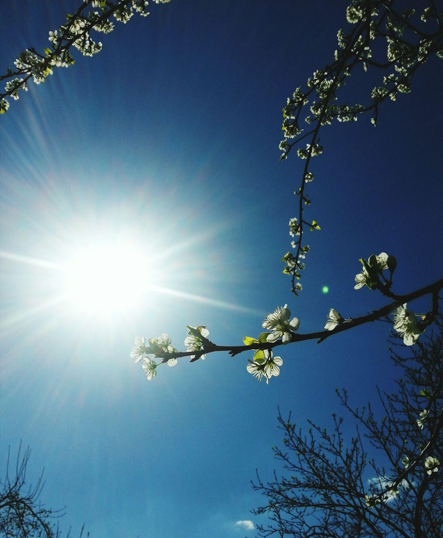 Sun EyeEm Best Shots Spring2015 Flowe Open Edit