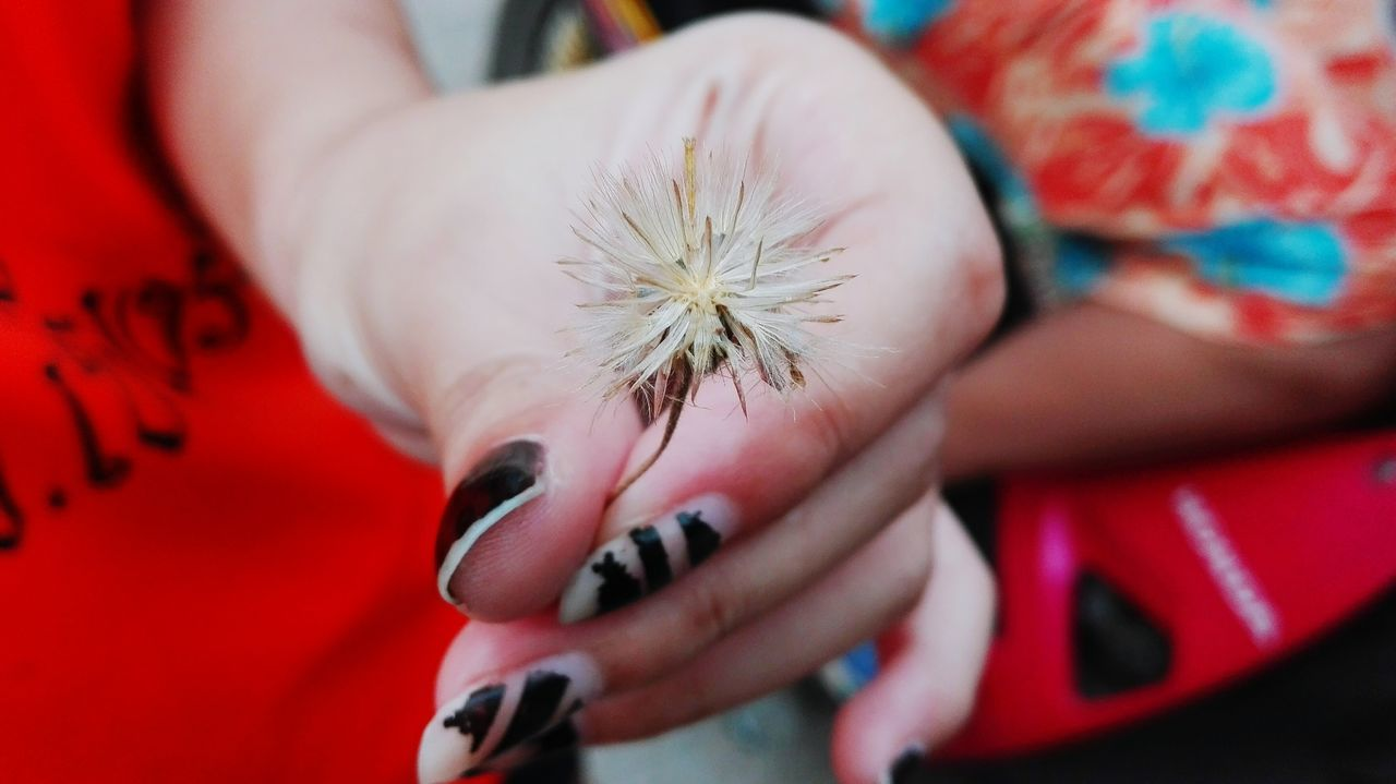 real people, childhood, lifestyles, human hand, close-up, boys, girls, child, flower, day, one person, indoors