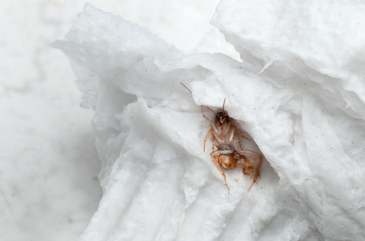 Beautiful stock photos of cockroach, Bangkok, Close-Up, Cockroach, Cold Temperature