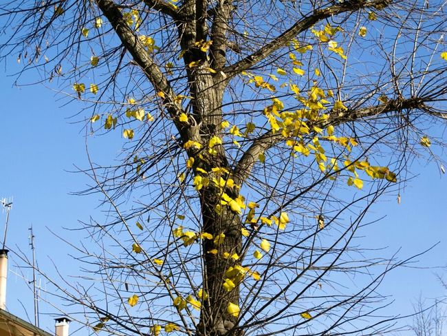 winter is here.. Leaf Sky Landscape Italy Colors Tree Winter Blue Yellow Cielo Brown Giallo Azzurro Colori Nature