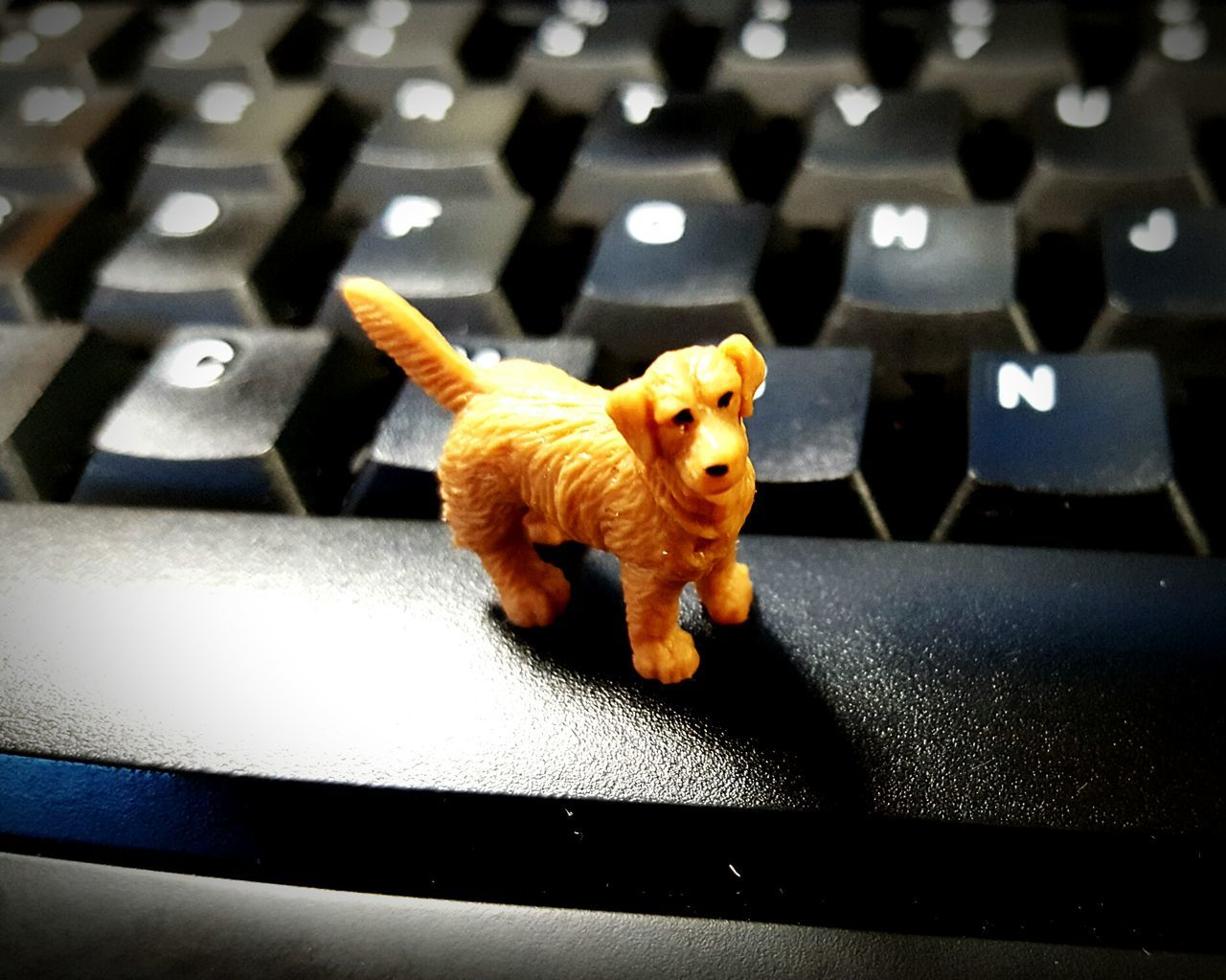Just a little bit of fun One Animal Dog Pets Animal Themes Animal No People Mammal Office Keyboard Fun Miniture Cellphone Photography Close Up