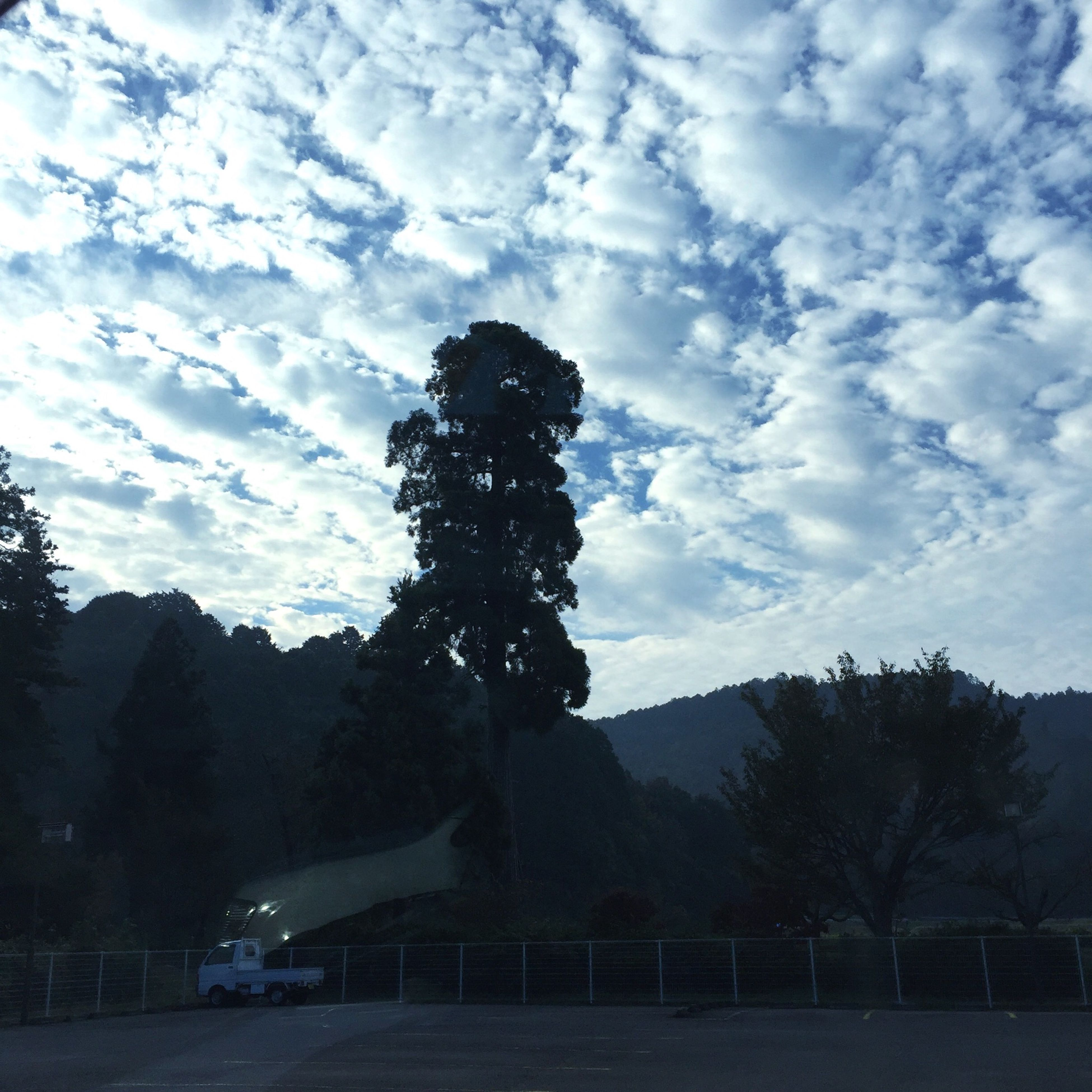 tree, sky, cloud - sky, silhouette, cloud, road, transportation, cloudy, human representation, statue, outdoors, nature, day, sculpture, street, growth, lifestyles, sunlight