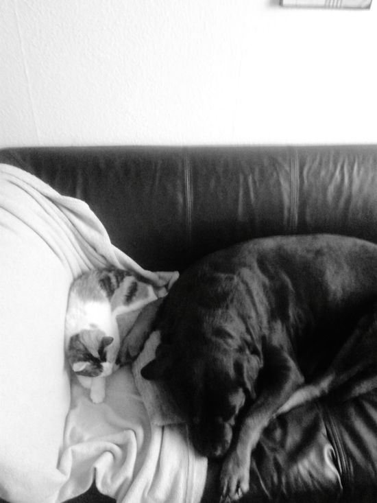 'Platz' ist immer auf meinem Sofa :D SOFA TIME CouchTime Dog And Cat Napping Katze Und Hund Faulebande @home ♡ Indoors  Domestic Animals Meine Katze Mein Hund Lilli Mit Freya Cat And Dog Sleeping Schlafende Tiere Sofa Welcome To Black Black And White Friday