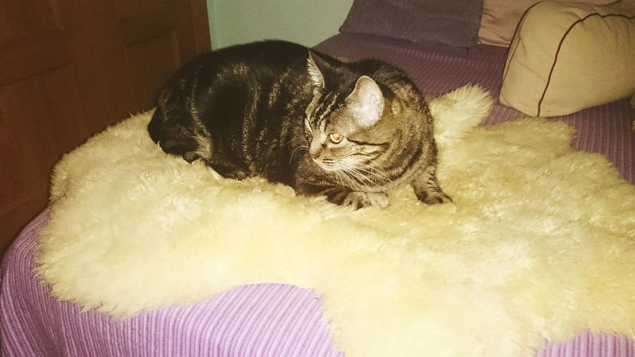 Cats Cats 🐱 Cat Lovers Animal_collection Animal Photography Animals Gato😽 Gatos 😍 Gatosfelizes Animal Love Animales