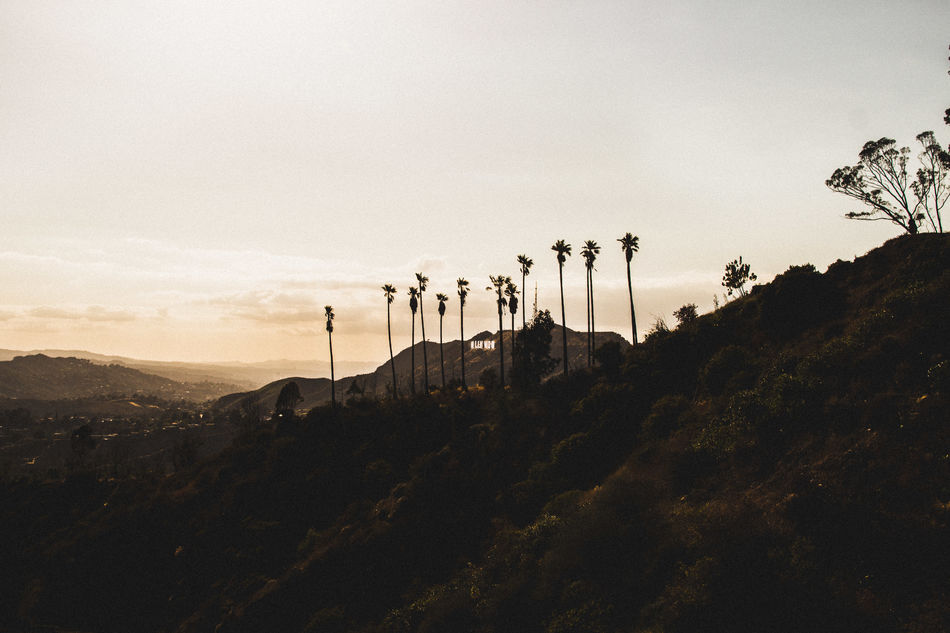 California Hollywood Hollywood Sign Landscape Los Angeles, California Outdoors Palm Trees Scenic Sunset